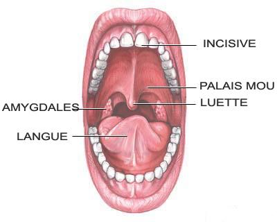 M decine esth tique et anti ge dr boustany orl for Interieur de la bouche